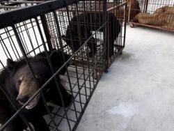 Новость на Newsland: В Сальвадоре запретили использование животных в цирках
