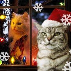 Коты творят рождественские чудеса