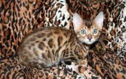 11 самых дорогих животных мира (фото)