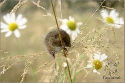 Мышиными тропами: куда поехать, чтобы угодить символу наступающего года