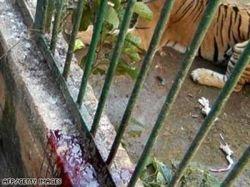 Самые ужасающие происшествия в зоопарках (фото)
