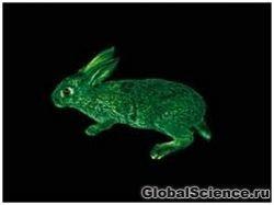 Новость на Newsland: Организмы животных будут фабрикой медицинских препаратов