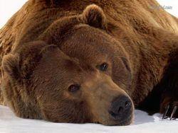 Новость на Newsland: Медведь угнал бак с остатками еды из ресторана