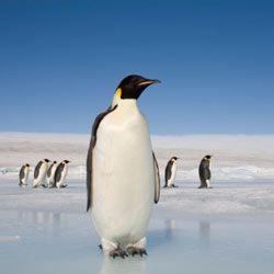 Антарктида приглашает любителей экзотики и экстрима