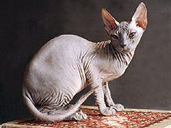 Новость на Newsland: В России кота арестовали за долги хозяина
