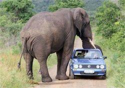 Новость на Newsland: Во Франции сбежавший слон убил пенсионера
