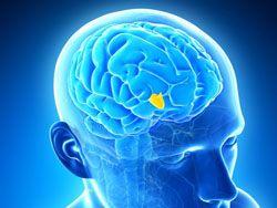 Источник вечной молодости поместили в мозг