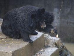 Новость на Newsland: Официантка на Аляске отругала медведя, который зашел в бар