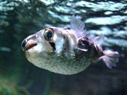 Новость на Newsland: 4 интересных факта о самых ядовитых животных в мире