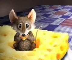 Онищенко, не трожь сыр!