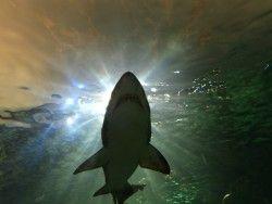 Новость на Newsland: Американец отбился от акулы парой боксерских приемов