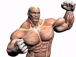 Новость на Newsland: Мускулы запоминают даже краткосрочные воздействия стероидов
