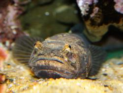 Новость на Newsland: В Англии жителям мешает спать рыба