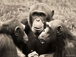 Новость на Newsland: Самые сообразительные животные