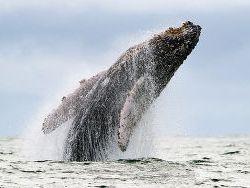 Новость на Newsland: Деградация морей