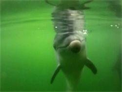 Новость на Newsland: Вирус убил в США более тысячи дельфинов