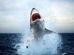 Новость на Newsland: Акула сама запрыгнула в лодку к рыбакам