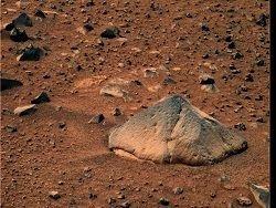 На Марсе вырос пончиковый гриб
