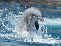 Дельфин примет участие в эстафете олимпийского огня