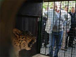 Путин поигрался с леопардом, а Медведев покормил бактерий