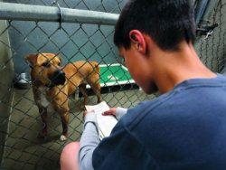 В Вашингтоне начали читать книги бездомным животным
