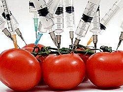 Новость на Newsland: ГМО в России — это вопрос народного референдума