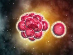 Печень можно будет выращивать из клеток кожи