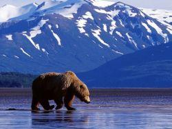 Новость на Newsland: Петицию о присоединении Аляски к РФ подписали 12 тысяч человек