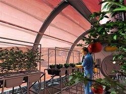 На МКС запустят специальную систему для выращивания овощей