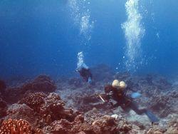 Новость на Newsland: ООН критикует Австралию за загрязнение Большого Барьерного рифа