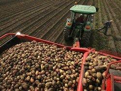 Новость на Newsland: Россия запретила импорт картофеля с Украины