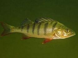 Новость на Newsland: Ученые: вырубка лесов приведет к гибели видов рыб