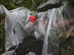 Новость на Newsland: LifeNews заплатит $ 100 000 за правду о крушении