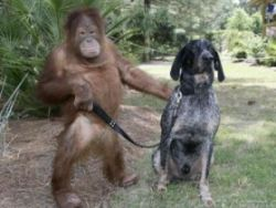 Новость на Newsland: Как превратить человека в обезьяну?