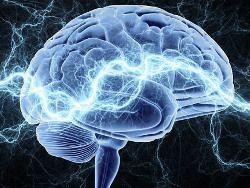 Японские ученые обнаружили белок, связанный с памятью