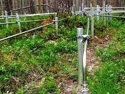 В лесах Норвегии появилась стальная паутина