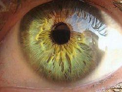 В Японии впервые пересадили сетчатку глаза из стволовых клеток