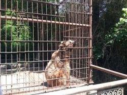 Новость на Newsland: Дагестан: животная жестокость