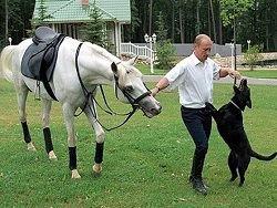 Новость на Newsland: Путин приказал вырубить лес вокруг резиденции