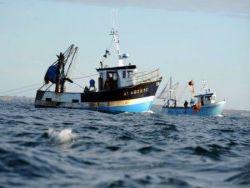 Новость на Newsland: ЕС продлил запрет на промысел глубоководных акул