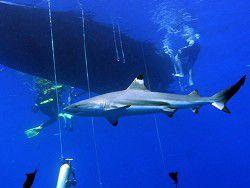 Новость на Newsland: Учёные: акулы более способны к обучению, чем кошки