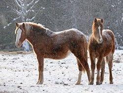 Омская область возвращается к транспорту на конной тяге