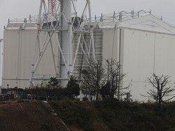 В рисе из префектуры Фукусима нет следов радиационного заражения