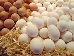 Украина закрыла транзит инкубационного яйца из Турции в Россию