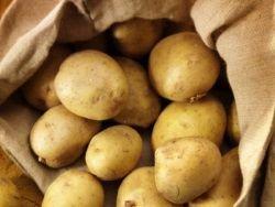 Россельхознадзор может разрешить ввоз некоторых продуктов из ЕС