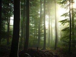 Эстонских политиков отправили выживать в лес