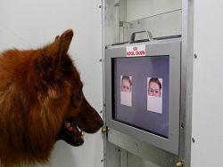 Новость на Newsland: Домашние собаки понимают человеческую мимику и улыбку