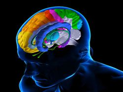 Как ритмы мозга управляют обучением