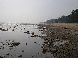 Ученые нашли в Финском заливе новые виды организмов