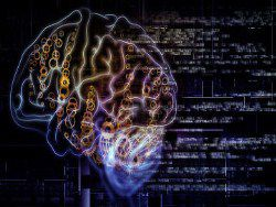 Обнаружена связь между мозгом и иммунной системой